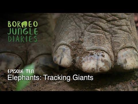 Borneo Jungle Diaries: Episode Ten - Elephants: Tracking Giants [UHD/4K] SZtv