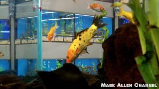 Pet Fish at Petco & Petsmart