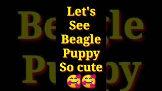 Let's see Beagle Puppy / Dog breed/ Short/ Doctor Pets