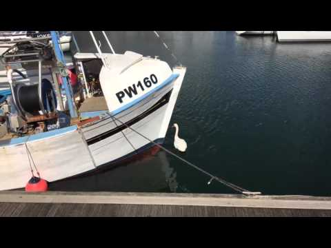 Plymouth Waterfront Partnership Communication - Get Involved