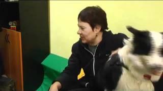 Собака занимается с детьми-инвалидами(, 2011-12-01T14:52:39.000Z)