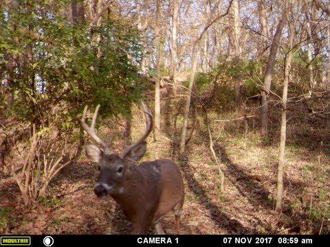 JEPC Cowhorn Buck 2017 11-19