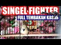 Ajib Cipoh Singel Fighter Sirtu Gacor Full Kombinasi Tembakan Kasar  Mp3 - Mp4 Download