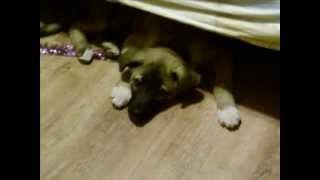 Памяти моей любимой собаки