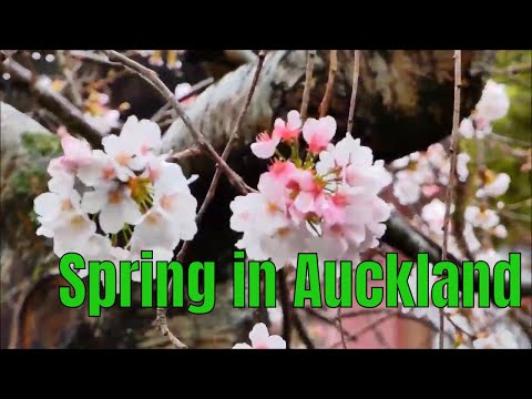 Spring in Auckland, New Zealand,