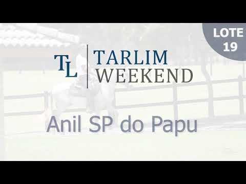Lote 19 - Anil SP do Papu (Potros Tarlim)