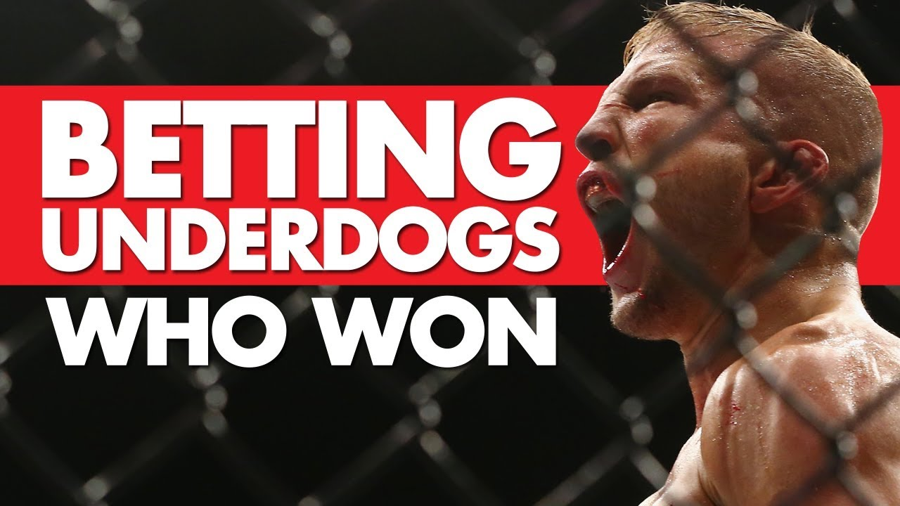 Mattdog betting football betting odds explained ukc
