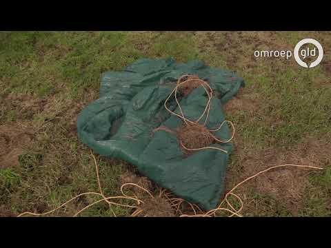 'Verschrikkelijk, het houdt niet op'; 2500 boompjes omgezaagd bij fruitteler