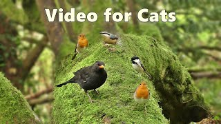 Videos for Cats to Watch : Birds Being Awesome - Watch at Home with Your Cat