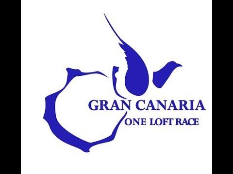 Gran Canaria One Loft Race || LiveStream || Pigeons Training in the loft