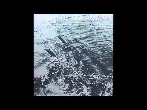 sounds of sea animals part 2: porpoise sounds - YouTube