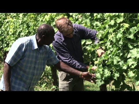 Sudanese refugees find unlikely home in rural Australia