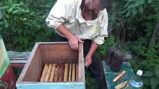 Эксперимент Пчелы выбирают матку