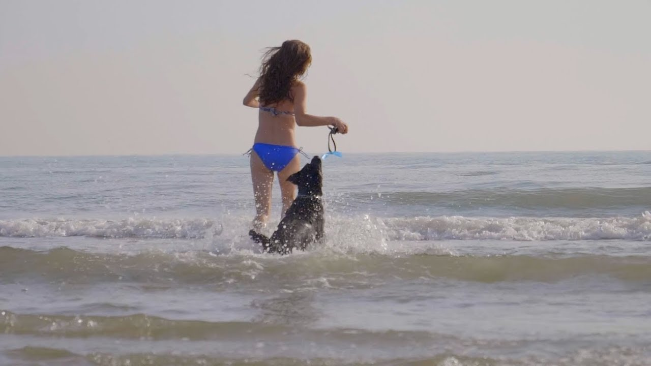 Rimini dog no problem bagno 81 rimini spiaggia cani rimini www
