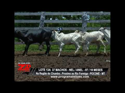 LOTE 13A