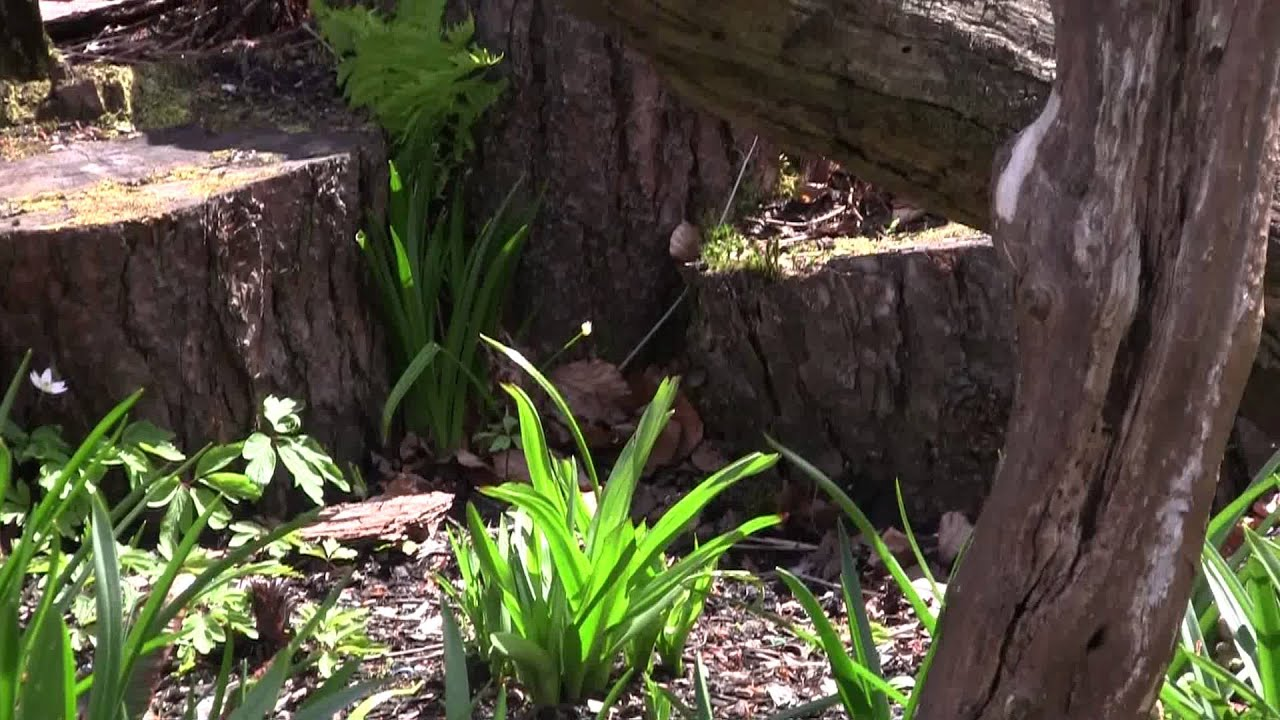 Garden With Old Logs And Dead Wood Youtube