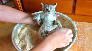 激おこ子猫がきなこ猫になるまでの8分クッキング。
