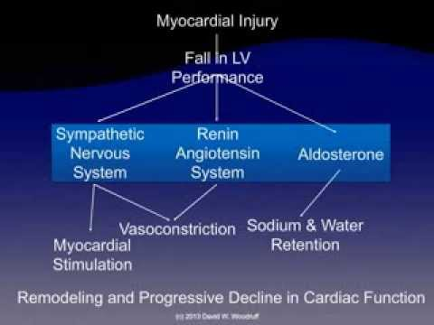 Pathophysiology Of Heart Failure YouTube
