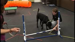 Ottawa Canine School 4