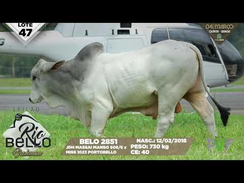 LOTE 47   BELO 2851