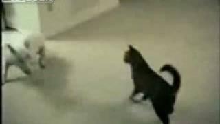 Страшнее кошки зверя нет))))))))