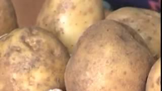 Как получить ранний картофель в Сибири уже в начале июля