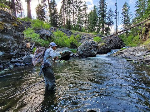 Mini Mountain Trout // 2 Weight Echo River Glass Rod Review