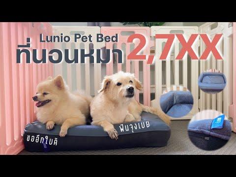 ครั้งแรก!! รีวิวที่นอนหมา 2,7XX บาท Linio Pet Bed มันนี่ หมี่ จะนอนหรือไม่ก็ลุ้นเอา