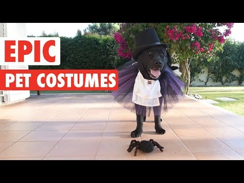 Rob and Hilary - Want to see some fun pet costumes for Halloween?