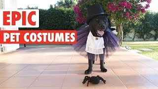 Epic Halloween Pet Costumes | Tricks or Treats?!