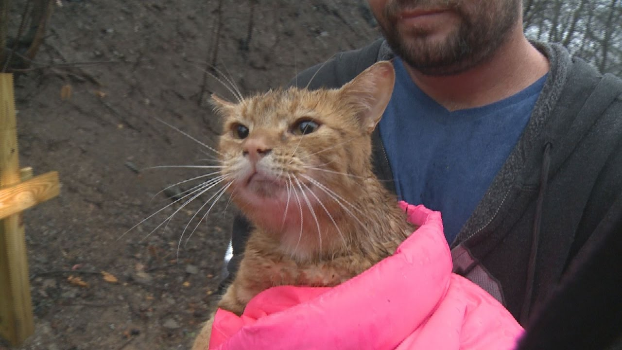 Awesome cat survives wildfire after home destroyed