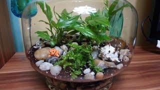 Jak sadzić rośliny miniaturki