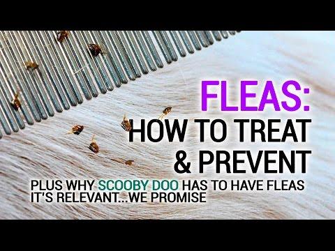 How do you know if a dog has fleas