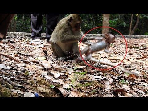 Why Cute Baby Hat Big Monkey So Much ST1136 Mono Monkey