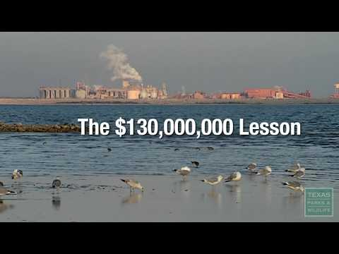 Lavaca Bay, the $130,000,000 Lesson - Texas Parks & Wildlife [Official]