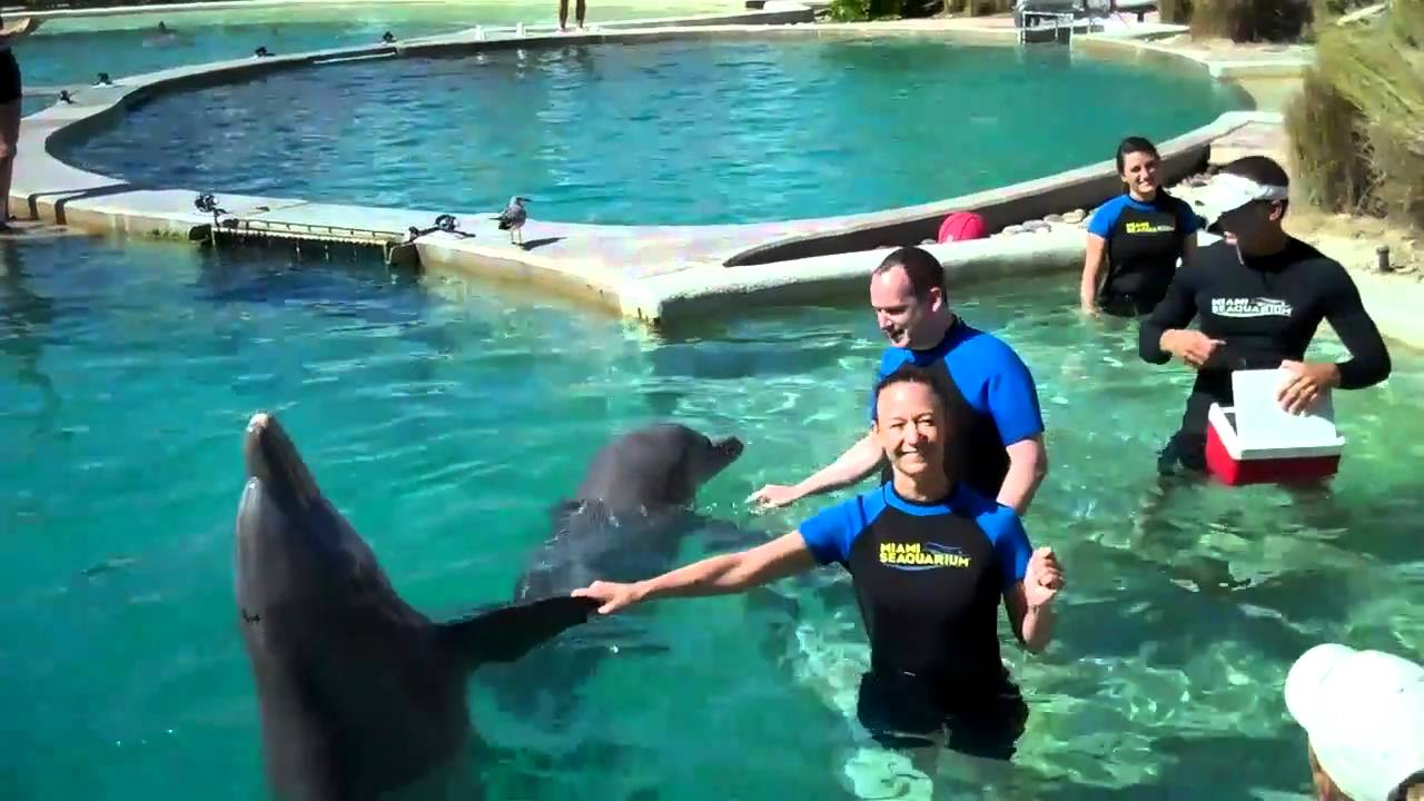 South Beach Miami Dolphin Swim Tour Dolphinworld Video