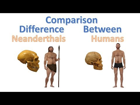 Difference Between Humans and Neanderthals  Homo Sapiens vs Neanderthal Comparison