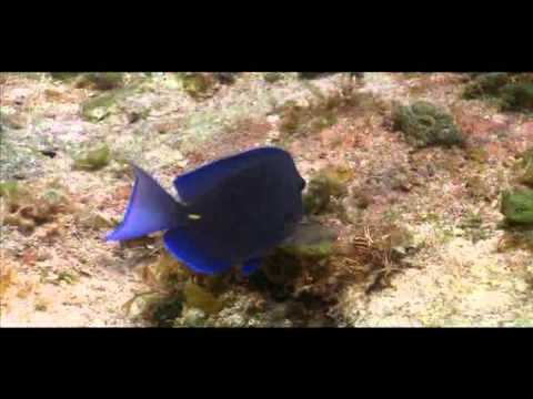 BREEF's Virtual Coral Reef Field Trip: Life on the Bahamian Coral Reef