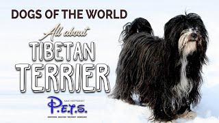 DOGS OF THE WORLD  TIBETAN TERRIER