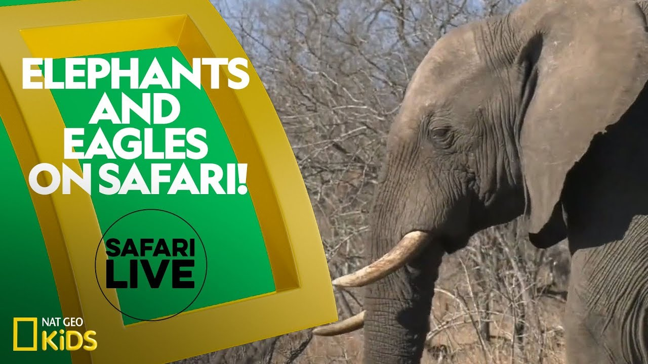 Elephants and Eagles on Safari! | Safari Live