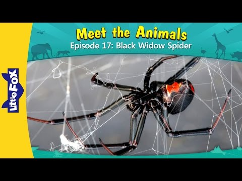 Meet the Animals 17: Black Widow Spider | Level 2 | By Little Fox