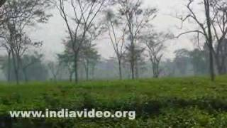 Durgabari tea estate Bamutia West Tripura India