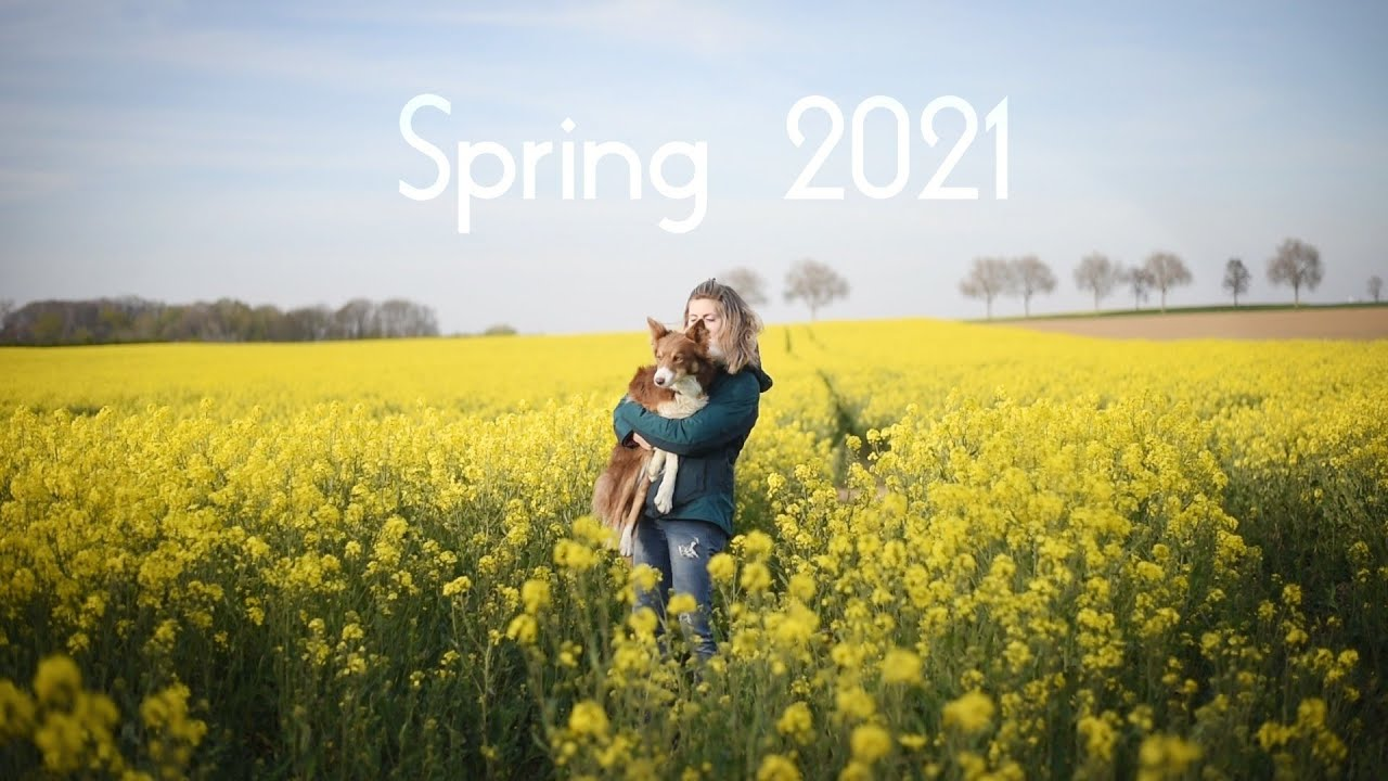 SPRING 2021 ✨ || Aiko & Owen. (Berger australien, border collie)