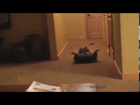 raccoon with fitting music