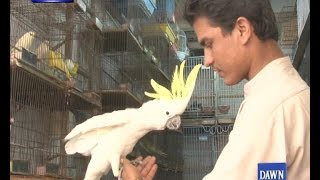 Famous Empress Bird Market in karachi