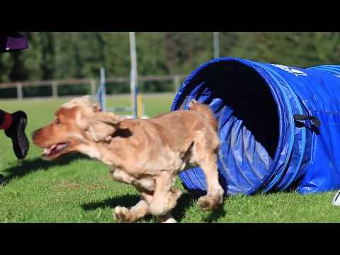 Milou and Stifler || Dog tricks and agility