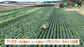 鳥取県琴浦町で家族4人で農業に取り組む農家を紹介します。 鳥取県琴浦町でブロッコリーやスイカなどを栽培する小前さん一家。4代続く農家で...