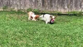 Damon and his ball