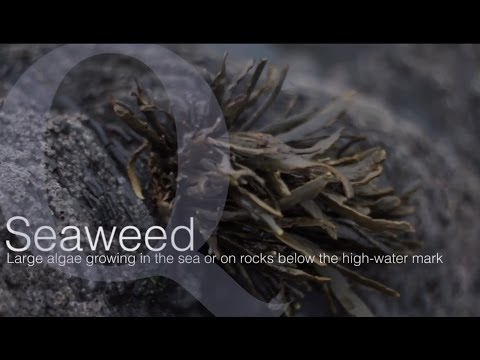 Foraging for seaweed, celebrating culinary surprises since 1961 by Quality Cottages