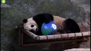 Prince Bei Bei Happy Earth Day!!!♥️????????????4/22/19
